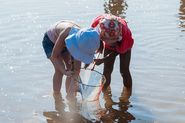 Children catching crabs