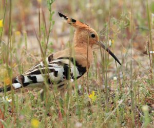 One-bedroom Hoopoe House